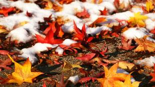 """""""Jesień powoli będzie skłaniać się ku zimie"""""""