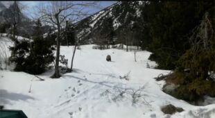 Niedźwiedź na szlaku
