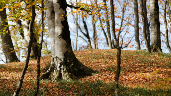 Pogoda na 5 dni: deszcz i rozpogodzenia, ostatnie dni października ze zmienną aurą