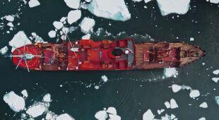 Rosjanie zbadają populację narwali w wodach Arktyki